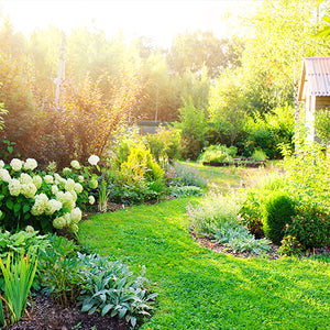 Therapeutic Gardening: How to Create Wellness in your Backyard