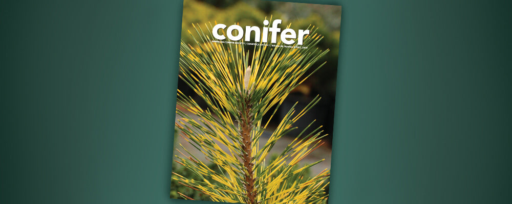 B&B-gardeners-reading-list-conifer-magazine-cover