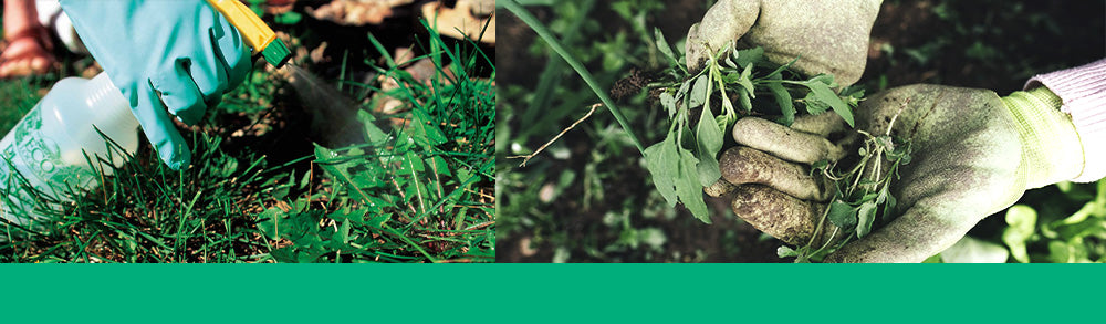 common weeds header