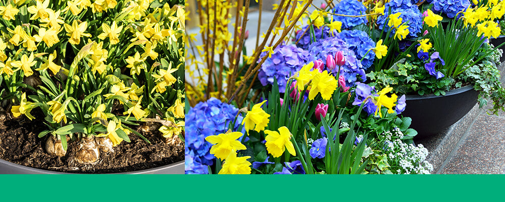 B&B-living-flower-arrangements-daffodils-tulips-header