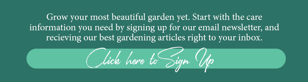 Call to action Brent and Becky's email newsletter sign up flower articles tips ideas inspiration advice growing gardening