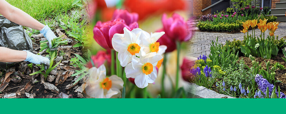 brent-becky-pruning-bulb-leaves-hyacinth-pruning-tulips-daffodils