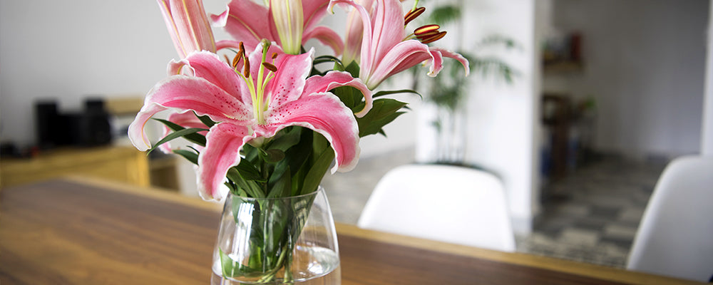 cut-bouquets-brent-and-becky-lilies-in-vase