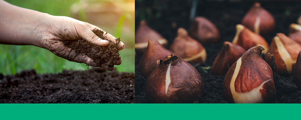 fall garden care guide planting bulbs soil