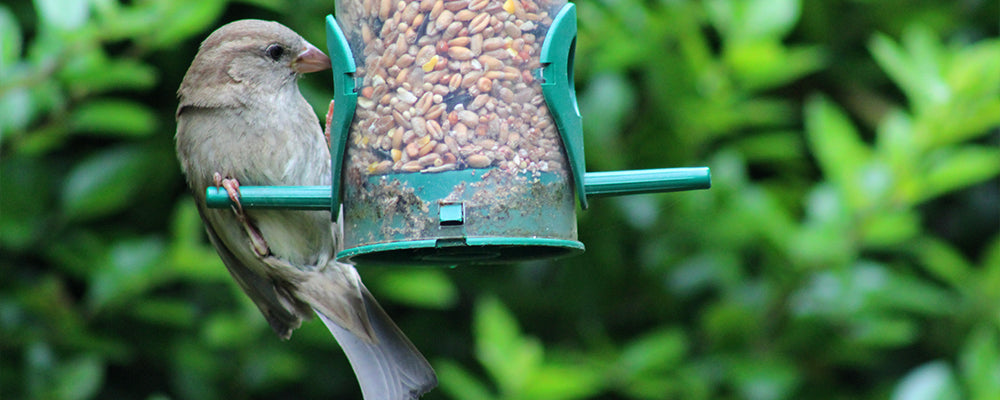 new-years-resolutions-for-gardeners-feathered-friend-bird-feeder