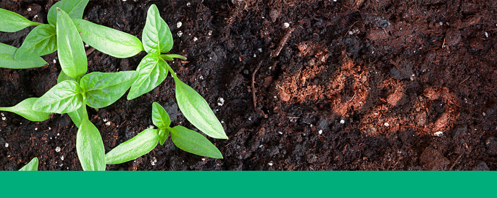 new-years-resolutions-for-gardeners-soil-2020header-image