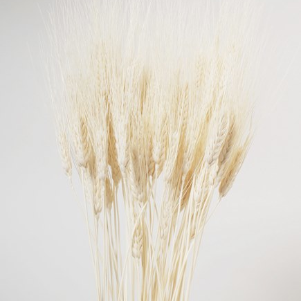 Bleached Wheat 30""