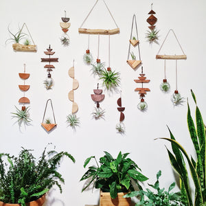 Air plant wall hangings inspired by nature and modern design.