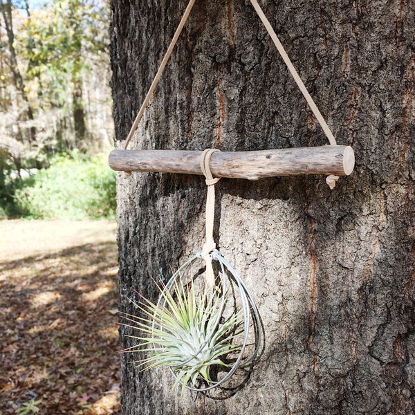 Branchin' Out - Single Air Plant Wall Hanging