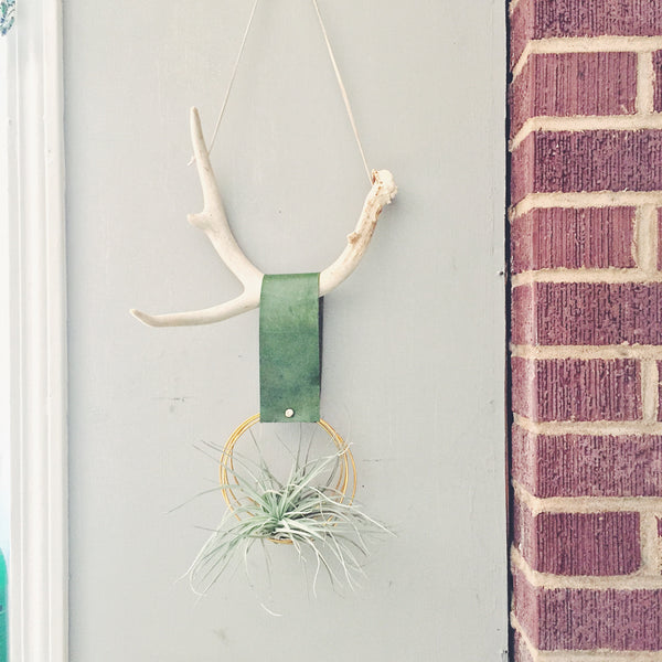 Antler Air Plant Wall Hanging - Green and Gold