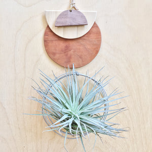 Modern Air Plant Wall Hanging - Sol