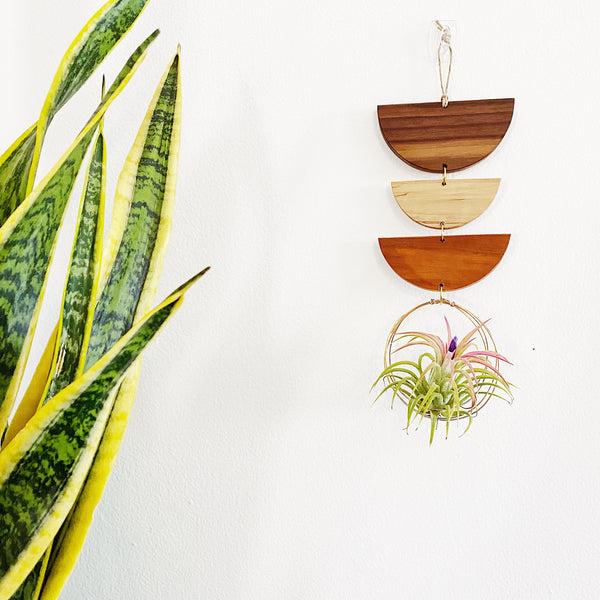 Air Plant Wall Jewelry no.011