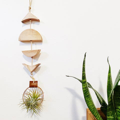 Modern Air Plant Wall Hanging no.42