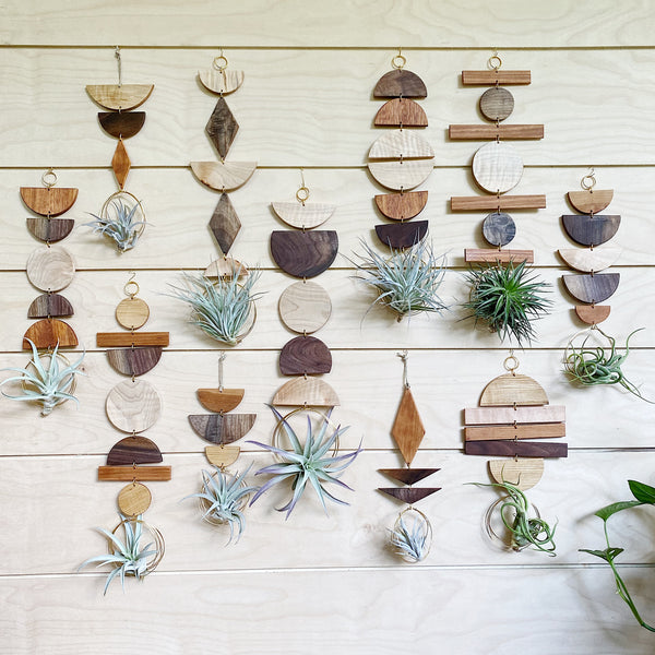 Air Plant Wall Jewelry no.043