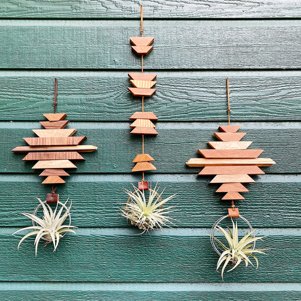 Modern Southwest Air Plant Wall Hanging no.38