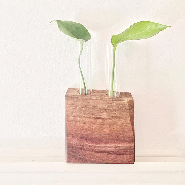 Plant Propagation Vase Live Edge Block no. 2 - Black Walnut