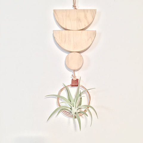 Modern Air Plant Wall Hanging - Lana