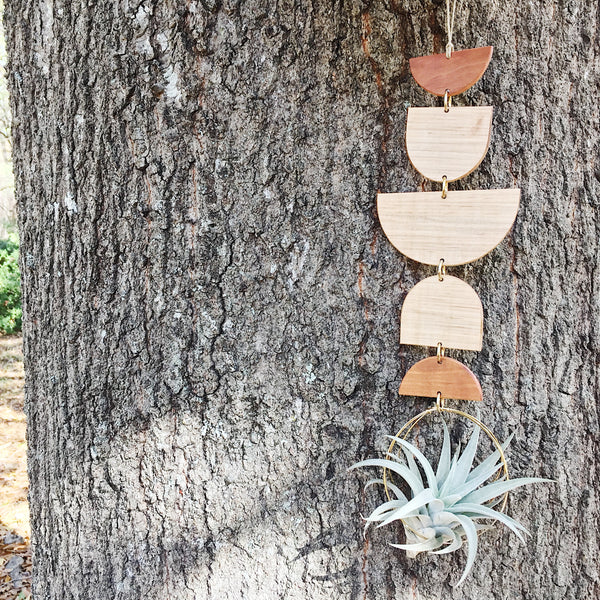 Modern Air Plant Wall Hanging - Rise