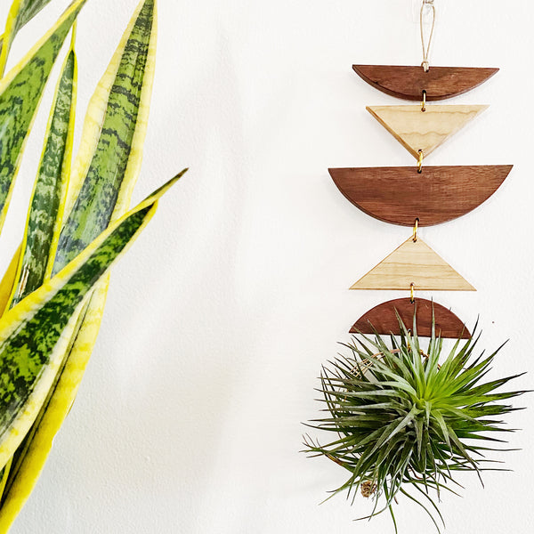 Air Plant Wall Jewelry no.009