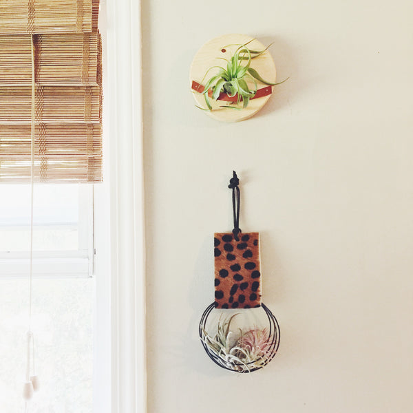 Cheetah Air Plant Hanger