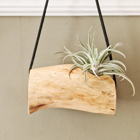 Cedar Branch Air Plant Wall Hanging no. 2