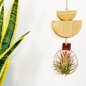 Modern Air Plant Wall Hanging no.30