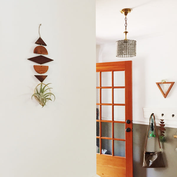 Air Plant Wall Jewelry no.023