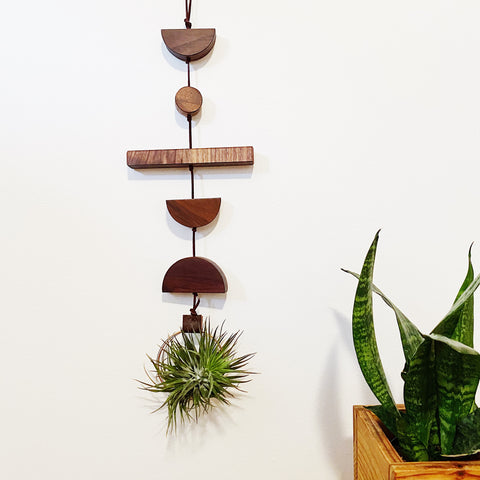 Modern Air Plant Wall Hanging no.35