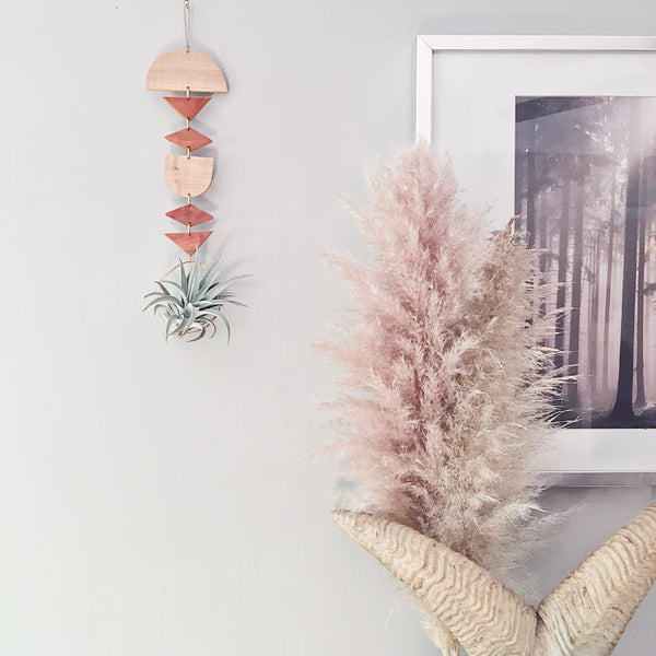 Modern Air Plant Wall Hanging - Aira