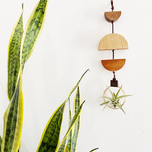 Modern Air Plant Wall Hanging no.33