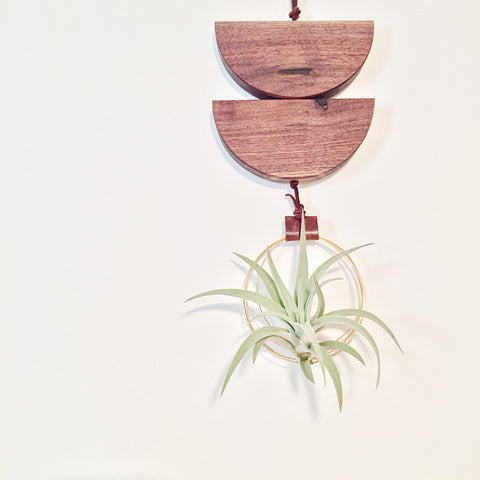 Modern Air Plant Wall Hanging - Willow