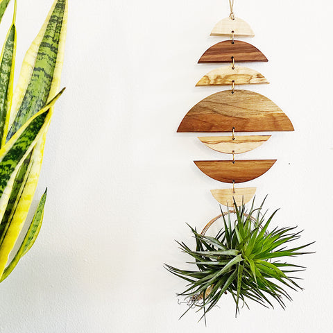 Air Plant Wall Jewelry no.012