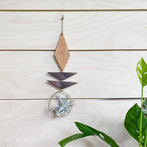 Air Plant Wall Jewelry no.050