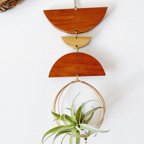 Air Plant Wall Jewelry no.027