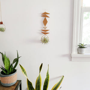 Air Plant Wall Jewelry no.054