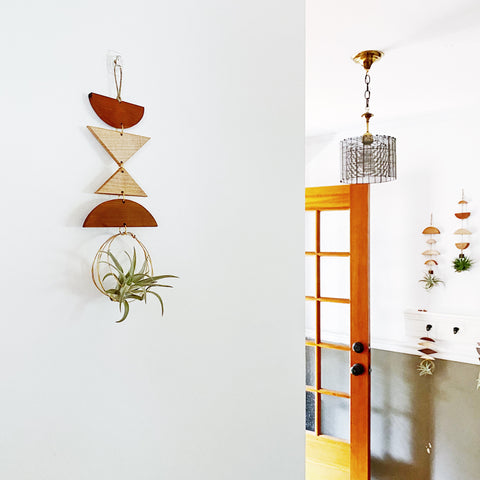 Air Plant Wall Jewelry no.019