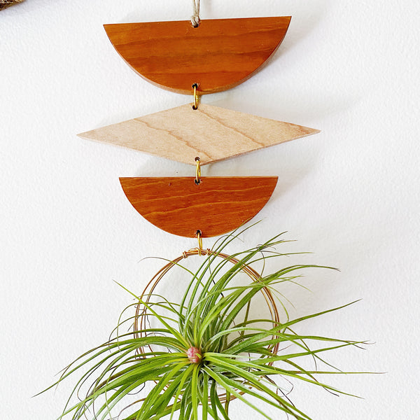 Air Plant Wall Jewelry no.025