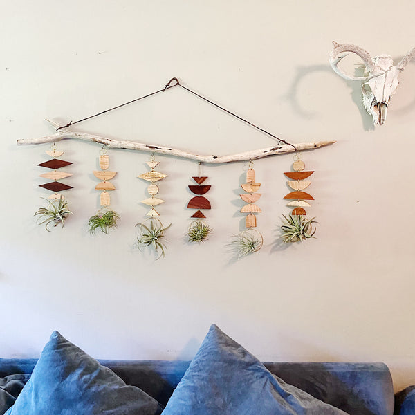 Air Plant Wall Jewelry no.038