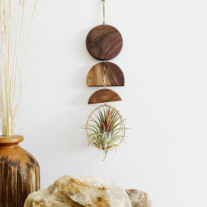 Moon Rising Air Plant Wall Hanging
