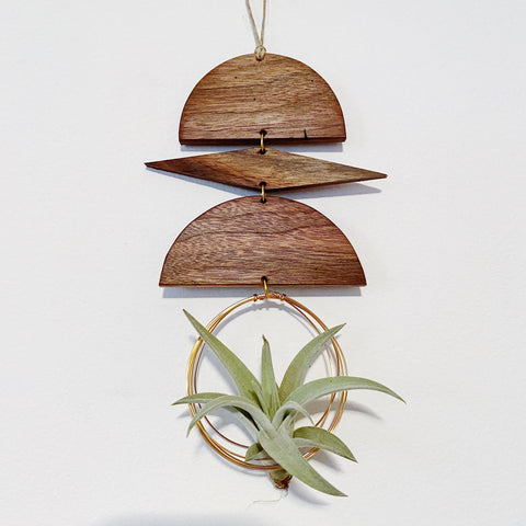 Air Plant Wall Jewelry no.016