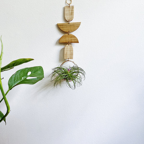 Air Plant Wall Jewelry no.031