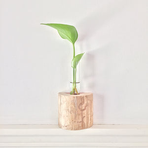 Plant Propagation Vase Live Edge Block no. 1 - Cedar