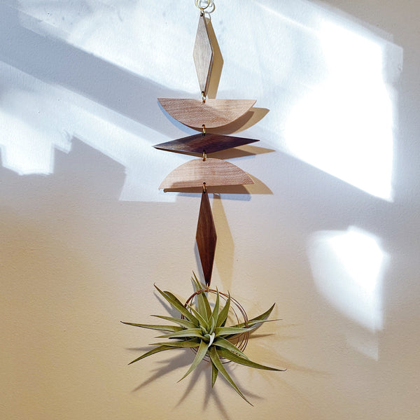Air Plant Wall Jewelry no.015