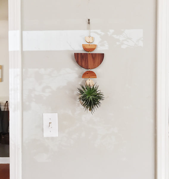 Modern Air Plant Wall Hanging - Flow