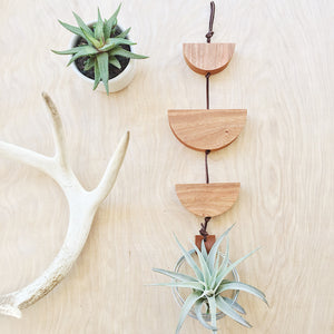 Modern Air Plant Wall Hanging - Urma Major