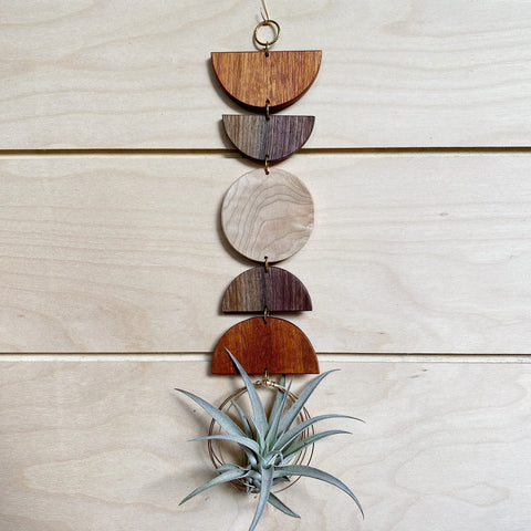 Air Plant Wall Jewelry no.044