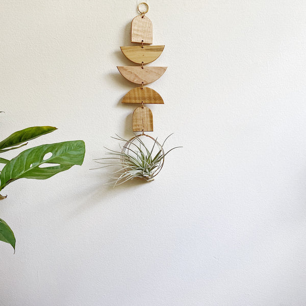 Air Plant Wall Jewelry no.032