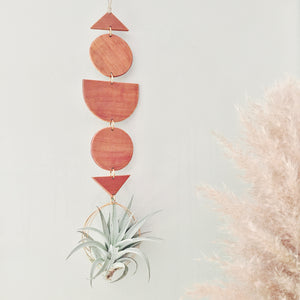Modern Air Plant Wall Hanging - Ways