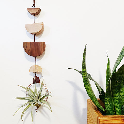 Modern Air Plant Wall Hanging no.40