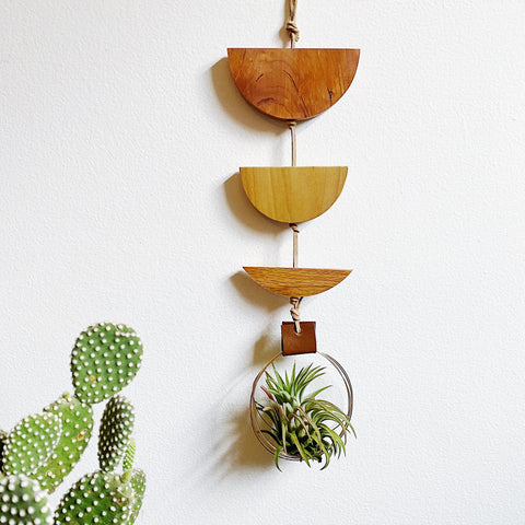 Modern Air Plant Wall Hanging no.46